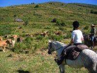 Disconnessione nelle Asturie
