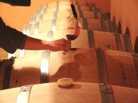 带酒窖品尝Bohedal葡萄酒厂的导游