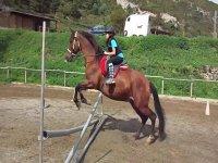 Aprendiendo a montar a caballo en Vilaformiu