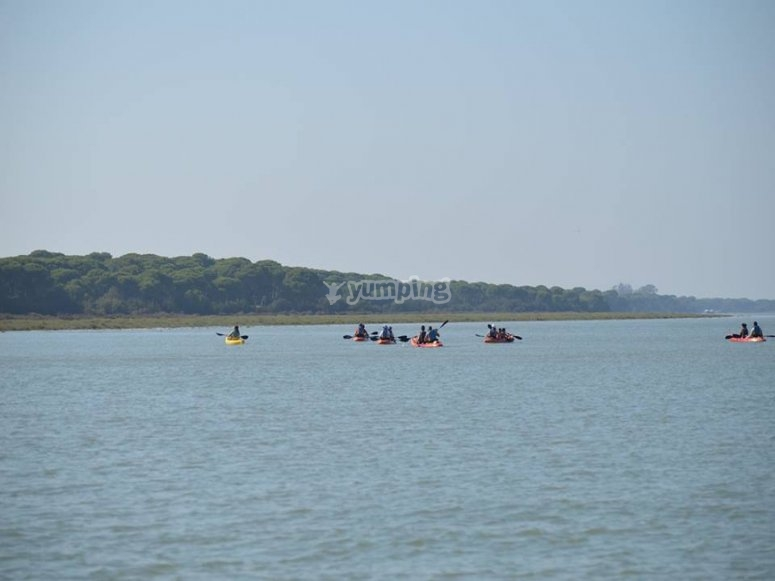 在穿过Doñana的皮艇