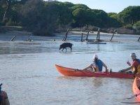 Ruta en kayak entre Sanlúcar y Doñana 90 minutos