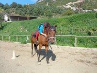 骑小马穿过Berguedà1小时