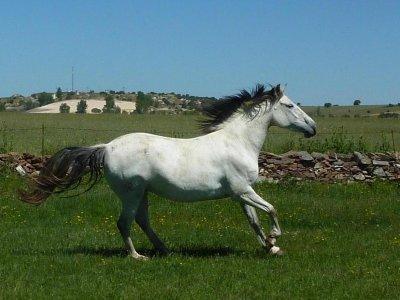 Paseo a caballo en San Pedro del Valle 1h 30 min