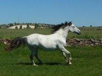骑马在San Pedro del Valle 1小时30分钟