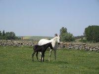 母马与小马驹