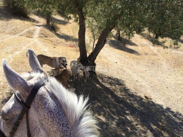 a caballo por la serrania de sevilla