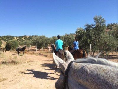 Ruta a caballo Morón de la Frontera 90 minutos