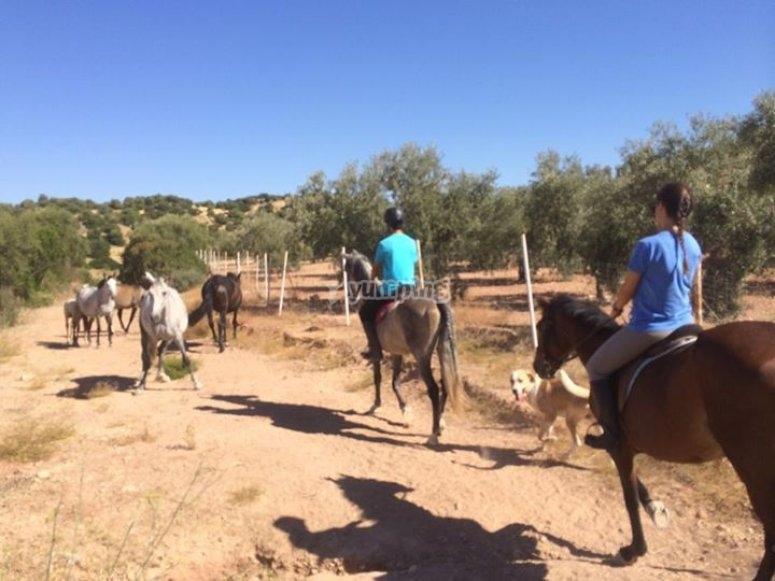 ruta entre caballos en libertad