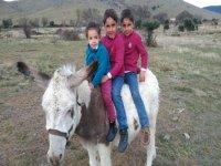 Visit the Donkeys & Other Animals in Segovia