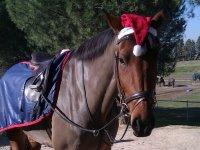 Horse at Christmas