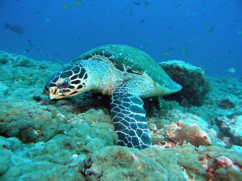 Fauna submarina