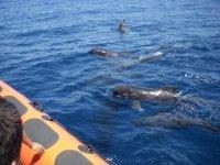 Avistamiento de cetáceos en lancha en el Estrecho