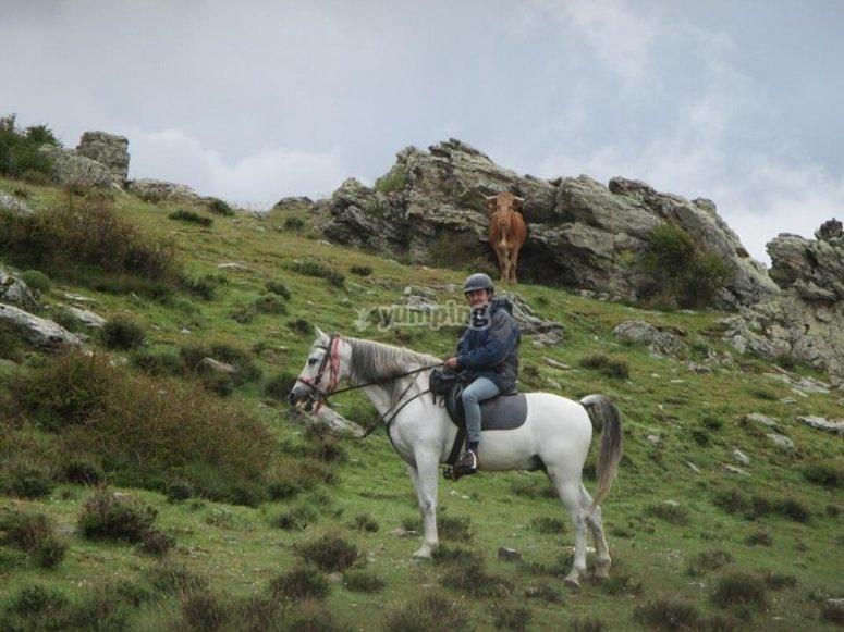 Equinos en la naturaleza