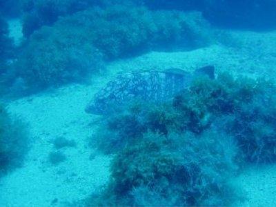 Goleta Marine Tours