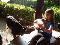 Alimentando al ternero