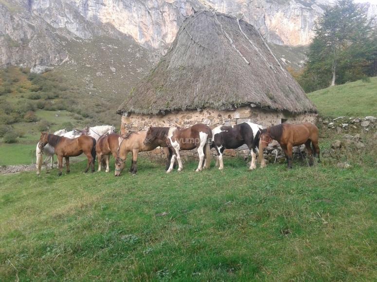 Riposo a cavallo a Somiedo