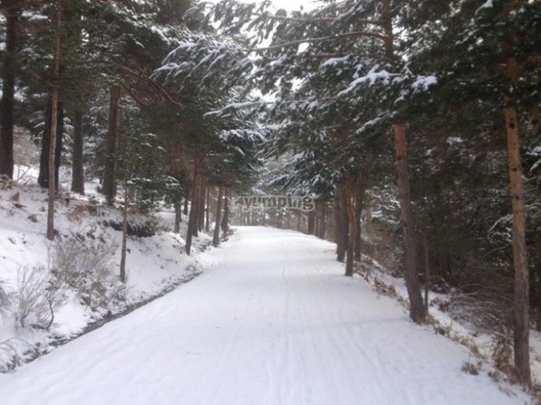 Stroll through the snow