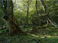 Senderismo en los bosques