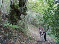 caminantes en el bosque