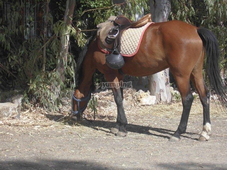 caballo comiendo