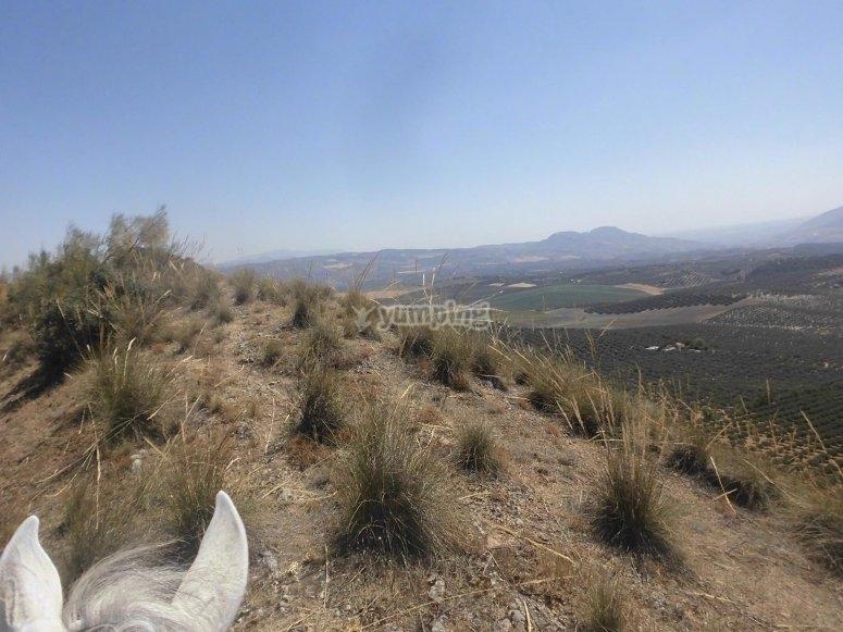 Rural landscapes on horseback