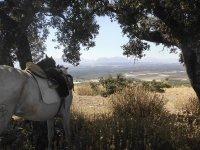 caballo descansando durante la ruta