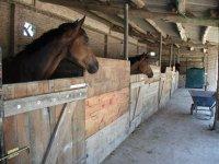 Oferta Excursi�n a caballo en el Bajo Llobregat 1hora