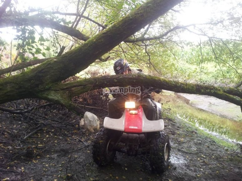 quad y tronco