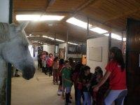 Cara a cara con uno de nuestros caballos en Coruña