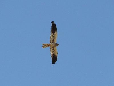 马德里的鸟类学指导了半天