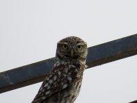 Sighting bird in Madrid 2 days trip