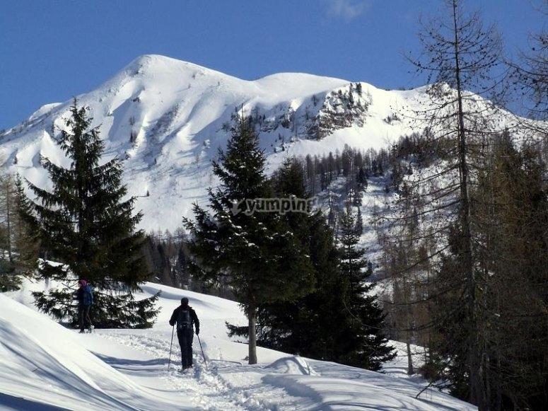 旅游在冬季积雪的松树之间