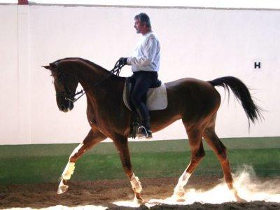 Aprender equitación Olmeda de las Fuentes 2 horas