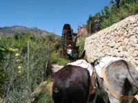 Donkeys next to the mill