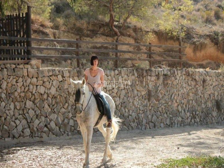 阿利坎特骑马课程