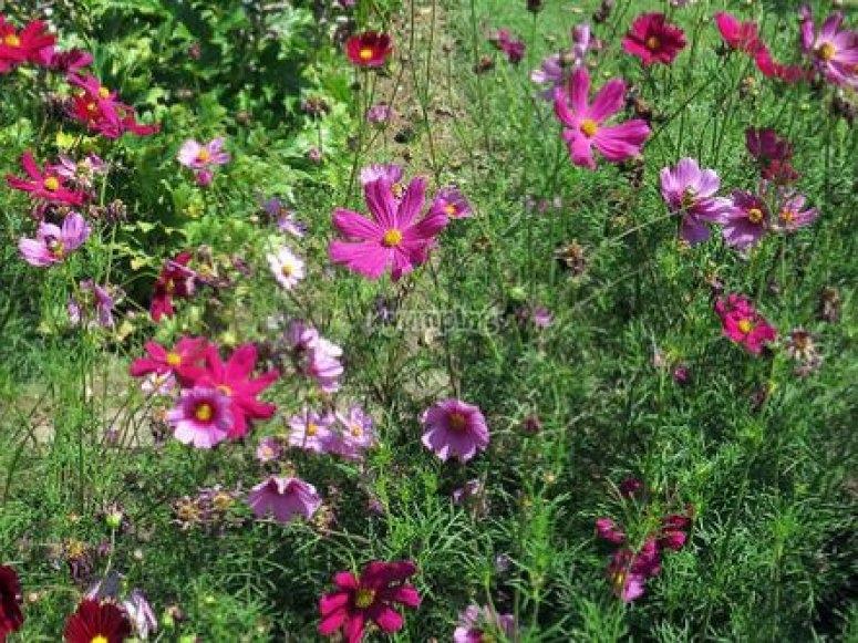 flores aranjuez
