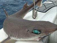 特内里费岛的卡赞鲨鱼钓鱼