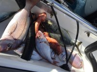 特内里费岛(Adeje)海岸上的各种钓鱼