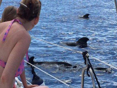 Canary Adventure Avistamiento de Cetáceos