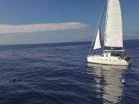 游览特内里费岛海豚和鲸鱼