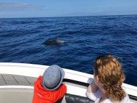 特内里费岛赏鲸