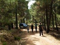 Paseando entre pinares