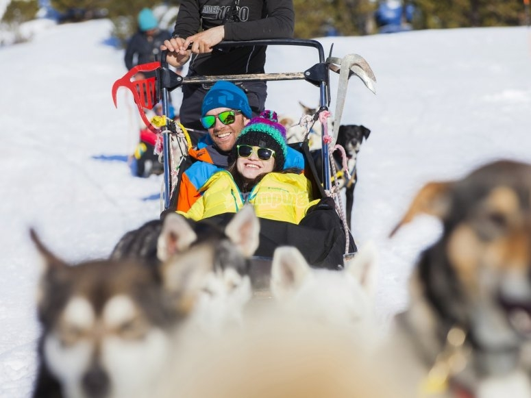 Having fun on the mushing sledge