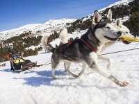 5 km (3.10 miles) Mushing Route for Adults
