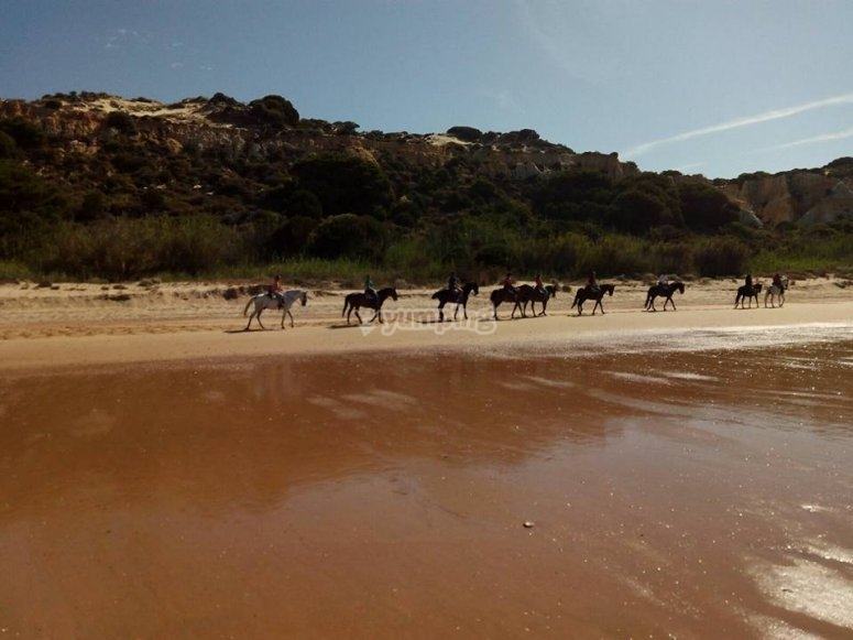 Horses next to the sea