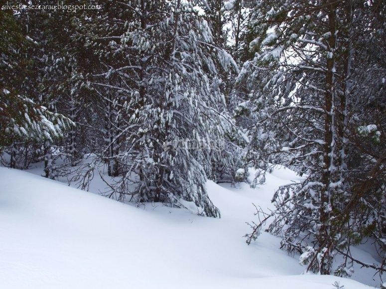 Raquetas de nieve Valdezcaray