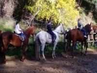 1h Horse riding lessons in Huelva