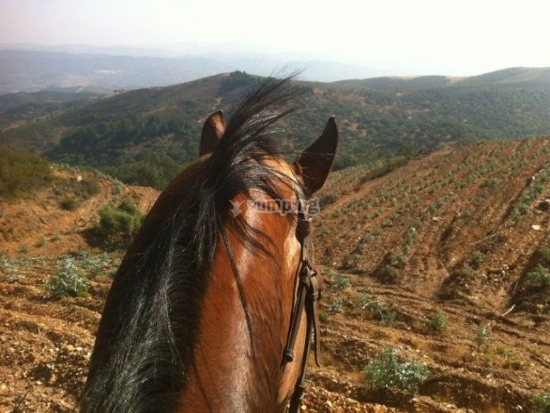 Views of the sierra from the horse