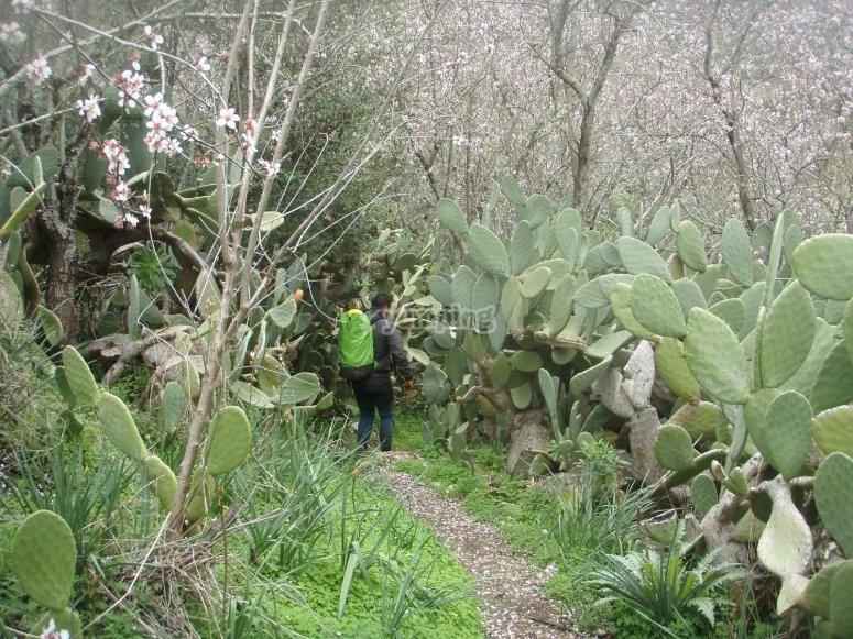 Vegetacion canaria en los alrededores del barranco