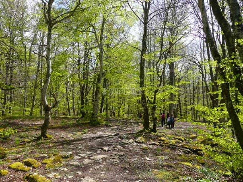bosque sierra